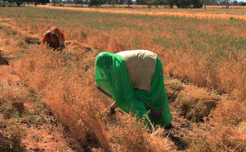 Four Years After the Spike in Prices of Pulses, is Self